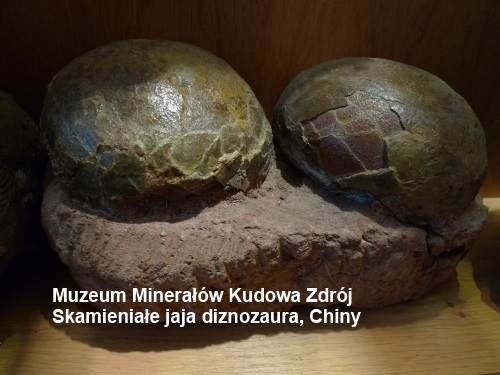 Skamieniałe jaja dinozaura, Chiny, Muzeum Minerałów Kudowa Zdrój