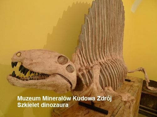 Szkielet dinozaura, Muzeum Minerałów Kudowa Zdrój